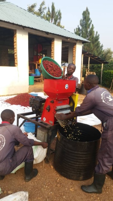 Kingha Coffee First Pulping 1